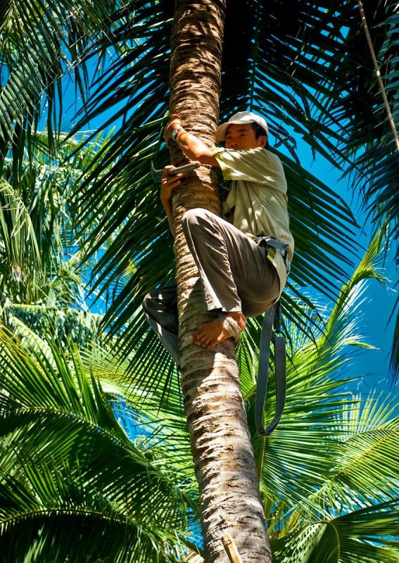 Представитель кокосодобывающей промышленности